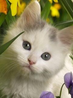 pisic in flori