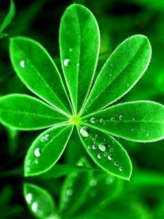 Image result for frunza verde