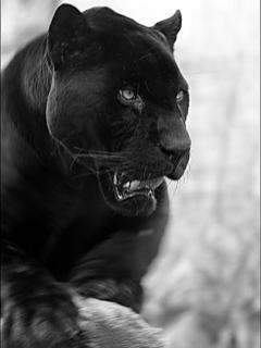 Presidente latitud menor  cigno boxe Bungalow puma neagra - settimanaciclisticalombarda.it