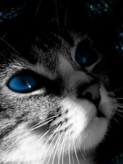 Pisica cu ochi albastri